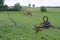 Holštýnské plemeno krav chovatel poslal na jatka, chovat je prý už nehodlá. O současném omlazeném stádu je přesvědčený, že už z ohrady neuteče.