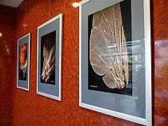 Vystavené fotografie zachycují krásu přírody v detailu.
