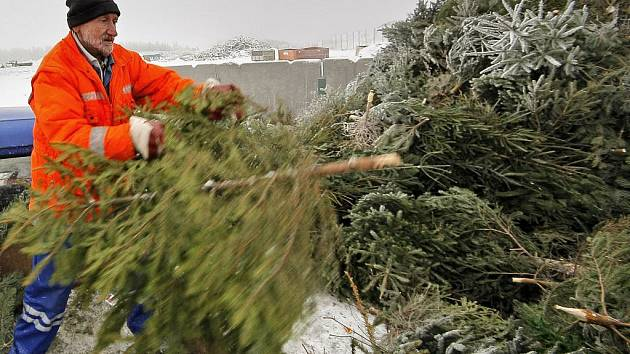 Do areálu  kompostárny v Henčově odvezou pracovníci Služeb města Jihlavy všechny odstrojené vánoční stromky, které lidé dají k popelnicím. Dřeviny se poté rozdrtí na štěpkovači a skončí jako součást kompostu.