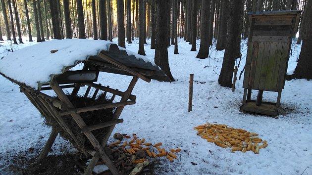 Veřejnost v Dobroníně může přikrmovat lesní zvěř, myslivcům to nevadí.