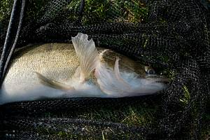 Dvacet cejleckých rybářů se  v závěru září utkalo o titul nejlepšího místního rybáře.