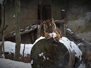 Zoo zasypal první sníh.