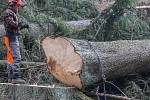 Kácení stromů u Velkého Beranova.