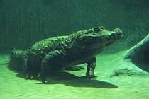 Krokodýl Rocco už má nový domov.