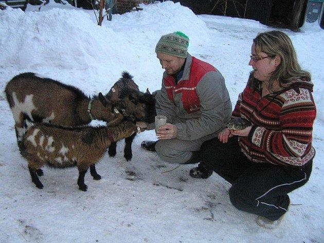 Manželé Křesťanovi provozují svůj zvířecí útulek, jediný na Havlíčkobrodsku a zřejmě i na Vysočině vůbec, zatím jen z vlastních finančních prostředků. Krmení pro zvířata jim občas nosí sousedé z okolí.