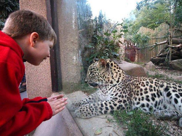 Areál šelem je pro malé návštěvníky jihlavské zoologické zahrady velkým zážitkem. Zoo by je chtěla i nadále překvapovat a rozšířit své prostory.