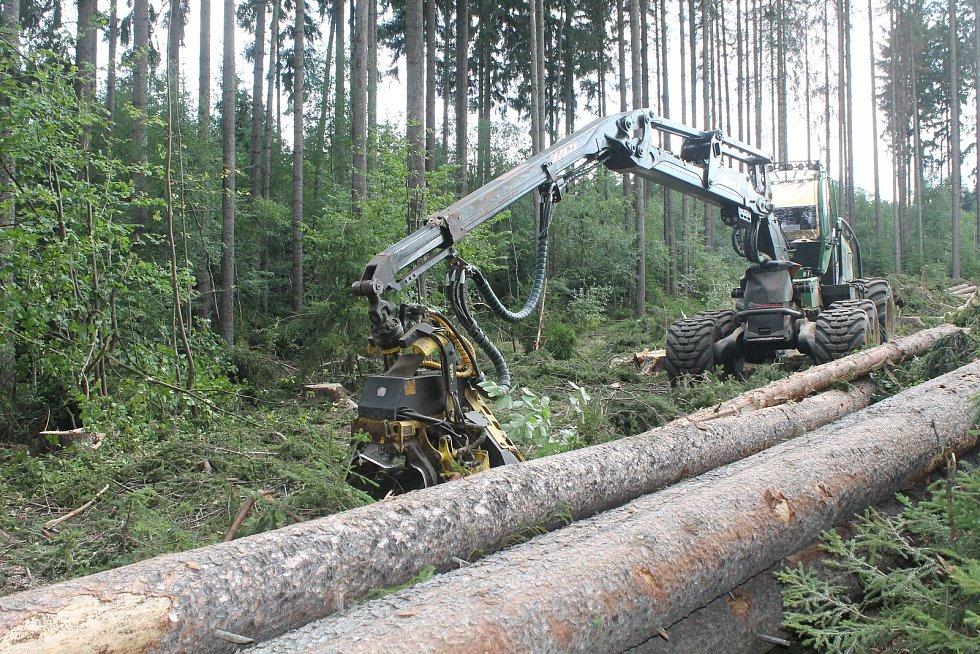 V lesích probíhá těžba, sucho však nahrává kůrovci.