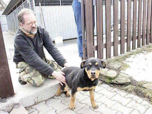 Dlouhou zimu většina psů trávila v teple.