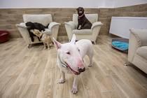 Jako doma. Pro psy, které dají majitelé do psího hotelu, je důležité, aby se tam cítili téměř jako doma.