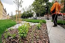 Místo upravených záhonů uvidí nyní obyvatelé a návštěvníci města před Gymnáziem Jihlava přerostlou trávu a uhynulé rostliny. Za to, jak to před školou vypadá, může také samotné počasí.