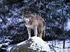 Ochránci vyrazili do Beskyd stopovat vlky, rysy a medvědy