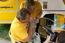 Podle statistik trpí až osmdesát procent psů onemocněními zubů a dásní. Tomu se dá předejít prevencí.