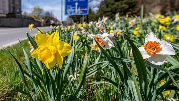 V Jihlavě jen kvetou nejen letničky, Správu městských lesů pak denně zaměstnává sekání trávy.