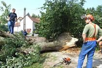 Noční bouře, která se přehnala nad obcí Moraveč na Pelhřimovsku, přelomila mohutný staletý strom. Odstranění polomu stálo tamní dobrovolné hasiče několik hodin práce.