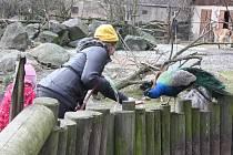 Jihlavská zoo nachystala prázdninový program pro školáky. Rodiny ale mohou do zoo vyrazit i jen tak.