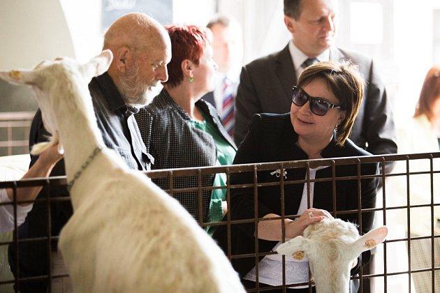 Ivana Zemanová na kozí farmě v Ratibořicích.