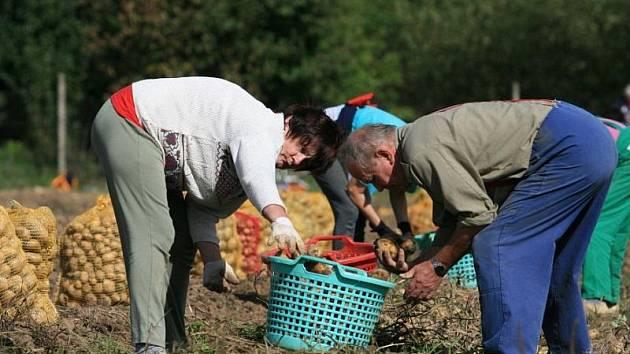 Zemědělci na Vysočině poslední dobou zaznamenávají čím dál tím větší zájem lidí o nakupování ovoce a zeleniny přímo od zdroje. Důvodem je jejich čerstvost a také to, že kupující znají původ plodin. Ilustrační foto.