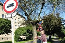 Na začátku ulice Evžena Rošického našel Jindřich Mišák (na snímku) proschlý javor. Suchých stromů je ve čtvrti mnohem víc.