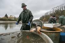 Na Vysočině se loví dva tisíce tun ryb ročně zhruba od osmdesátých let. V padesátých letech to přitom bylo pět tisíc tun ročně.