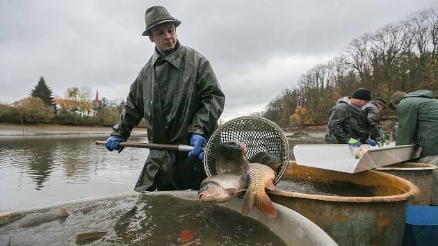 Velmoc na ústupu? Na Vysočině vyloví dva tisíce tun ryb, bývalo to dvakrát tolik