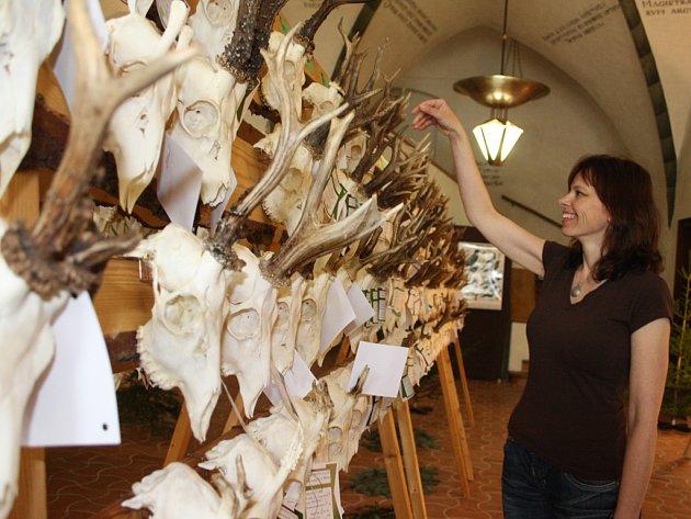Vystaveno je přes 400 trofejí srnčí, jelení, mufloní, daňčí a černé zvěře.