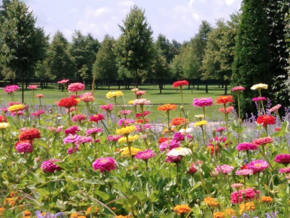 Zahrada u zámku v Jaroměřicích nad Rokytnou v těchto dnech nabízí barevnou květinovou přehlídku.