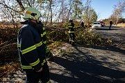 Spadlý strom v Novém Městě nad Metují. Ilustrační snímek