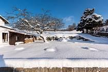 Před týdnem jabloň přikryl sníh.