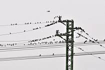 Ptáci na drátech mohli za výpadek elektřiny.