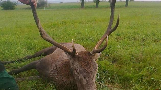 SMRT V SOUBOJI. Pro tohoto jelena se stala letošní říje tou poslední. ... 5d53befafb