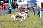MUSHEŘI si jubilejní 20. ročník závodů psích spřežení na Broďáku užívali.