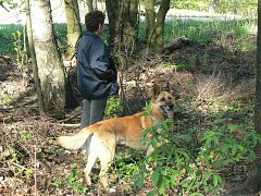 Při procházce honitbou by měl mít páníček svého psa uvazaného na vodítku.