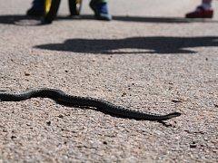 Hadi vylezli dřív než na sv. Jiří.