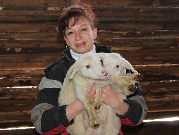 MONIKA MENČÍKOVÁ s jehňaty v ovčíně.