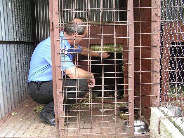 Velitel Městské policie Miroslav Horák kontroluje malého psího nalezence, který je umístěn v policejním kotci teprve třetí den. Nalezen byl na Plhově a zatím se po něm nikdo nesháněl.