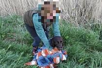 Psa uvízlého v meliorační kanalizaci se podařilo zachránit.