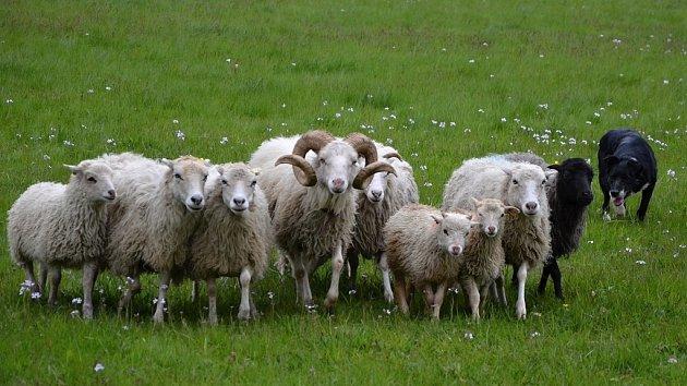 Ratibořické ovčácké slavnosti 2017