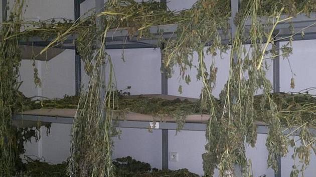 Zabavená marihuana.