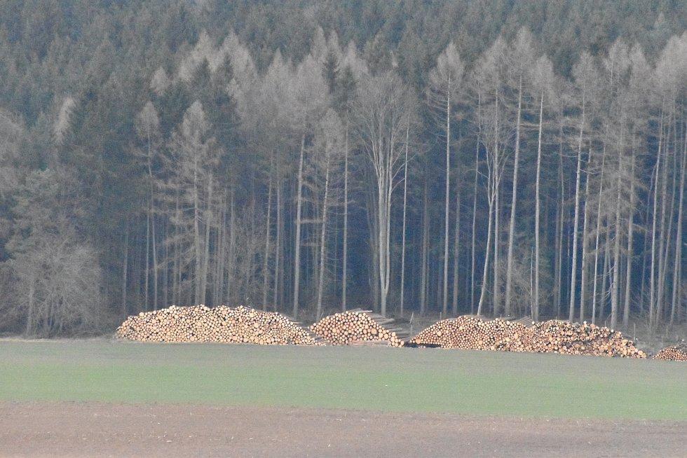 Kůrovcová kalamita má v posledních dvou letech takový rozvoj, že to odporuje všem známým lesnickým poučkám.