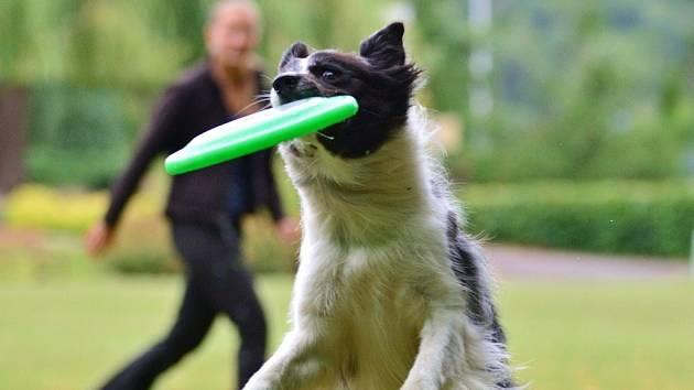 Dalšího velkého úspěchu dosáhla Alena Smolíková z Jaroměře s její fenkou Jerry na letošním mistrovství Evropy v dogfrisbee.