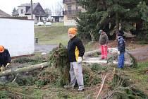Kácení stromů ve Vysokově.