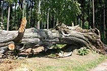 Legendární Špetlův buk, který ještě nedávno stál ve Slatině nad Úpou, zkolily vichřice a krupobití.