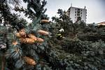 Silný vítr lámal stromy v Novém Městě nad Metují.