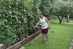"""""""Tady někde to bylo,"""" ukazuje Sylva Seidlmanová místo na zahradě u popínavých fazolí, kde zmije uštkla jejího syna."""