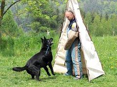 Devětatřicet majitelů psů se svými čtyřnohými miláčky přišlo do žďáreckého areálu kynologického klubu ZKO Hronov na tradiční májový jarní sportovní secvik psů, který pořádal místní klub.