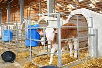 NOVÁ ODCHOVNA mladého dobytka v Suchém Dole nabídne březím jalovicím a telatům komfortní prostředí.
