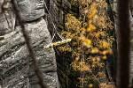 Součinnostní cvičení Skalní záchranné služby, HZS a ZZS v adršpašských skalách. Simulovaná záchrana zraněného horolezce ze skalní věže Milenci.