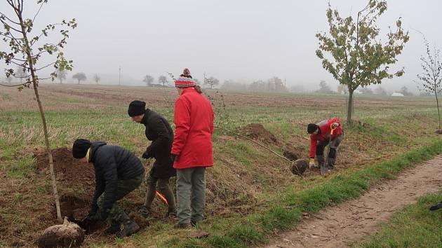 Ve Studnici se sešli dobrovolníci a zasázeli stromořadí, na které jim přispěla Nadace ČEZ ve svém grantovém programu Stromy. Kvůli pandemii bohužel nemohla být účast veliká a původně plánovaná vesnická akce se tak smrskla na pár dobrovolníků.