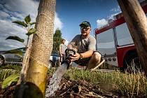 Dobrovolní hasiči z Jaroměře-Jezbin pomáhají ve městě kvůli trvajícímu suchu se zaleváním stromů v Jaroměři.