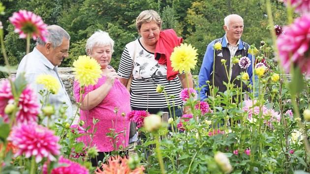 Tisíce květů pestrobarevných odrůd jiřin obdivovali návštěvníci České Skalice.